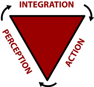 ActionPerceptionCycle